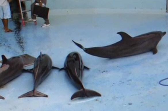 DolphinFloorTank