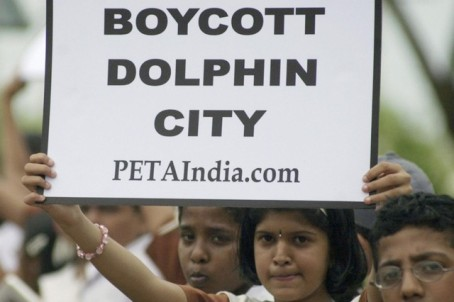 DolphinIndia_640