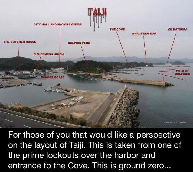 Twitter Bollie2 #Taiji Ground Zero via Martyn ... - Google Chrome 01012013 165900.bmp