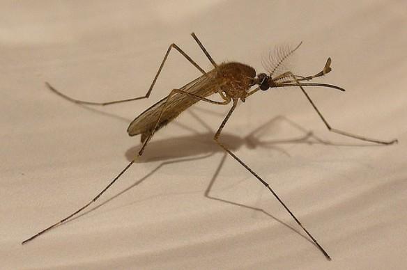 3MosquitoKillerWhale_640