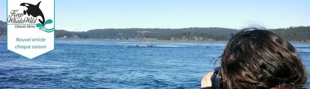 Keep Whales Wild, Cétacés Libres